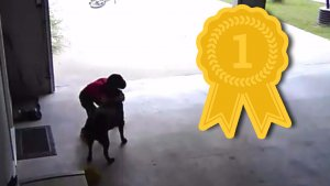 the greatest viral video