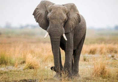 Elephant Prank Video | Reddit Gold