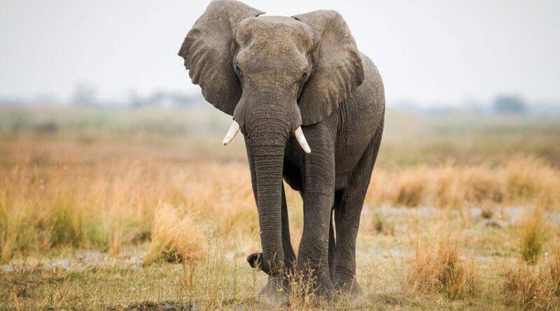 funny elephant prank video
